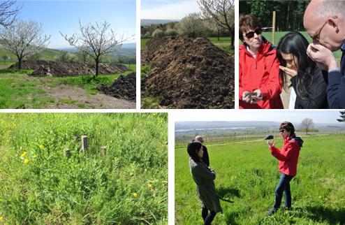 Oben: Einer der zwei Kompostplätze der Kühns; Geruchsprobe: Waldduft statt Fäulnis. Unten: Hier sind Präparate vergraben; Angela Kühn erklärt dem vinocentral-Team das Prinzip der Kompostpräparate.